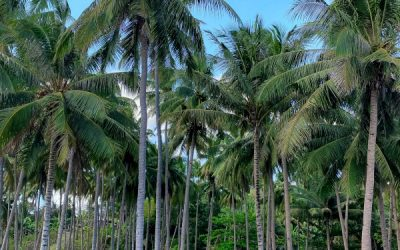 HOW TO GET SIARGAO IN COVID TIMES